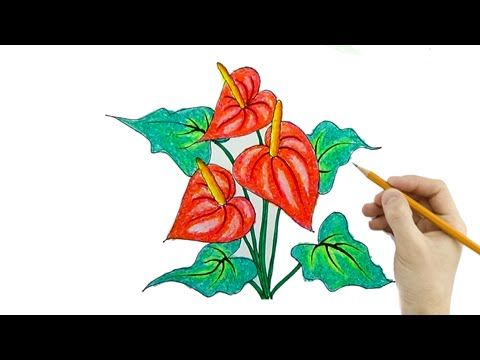 Anthurium Drawing Google Search Anthurium Drawings Sketch Book