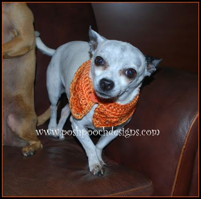 Pumpkin Spice Dog Collar Crochet Pattern Posh Pooch Designs Can Be