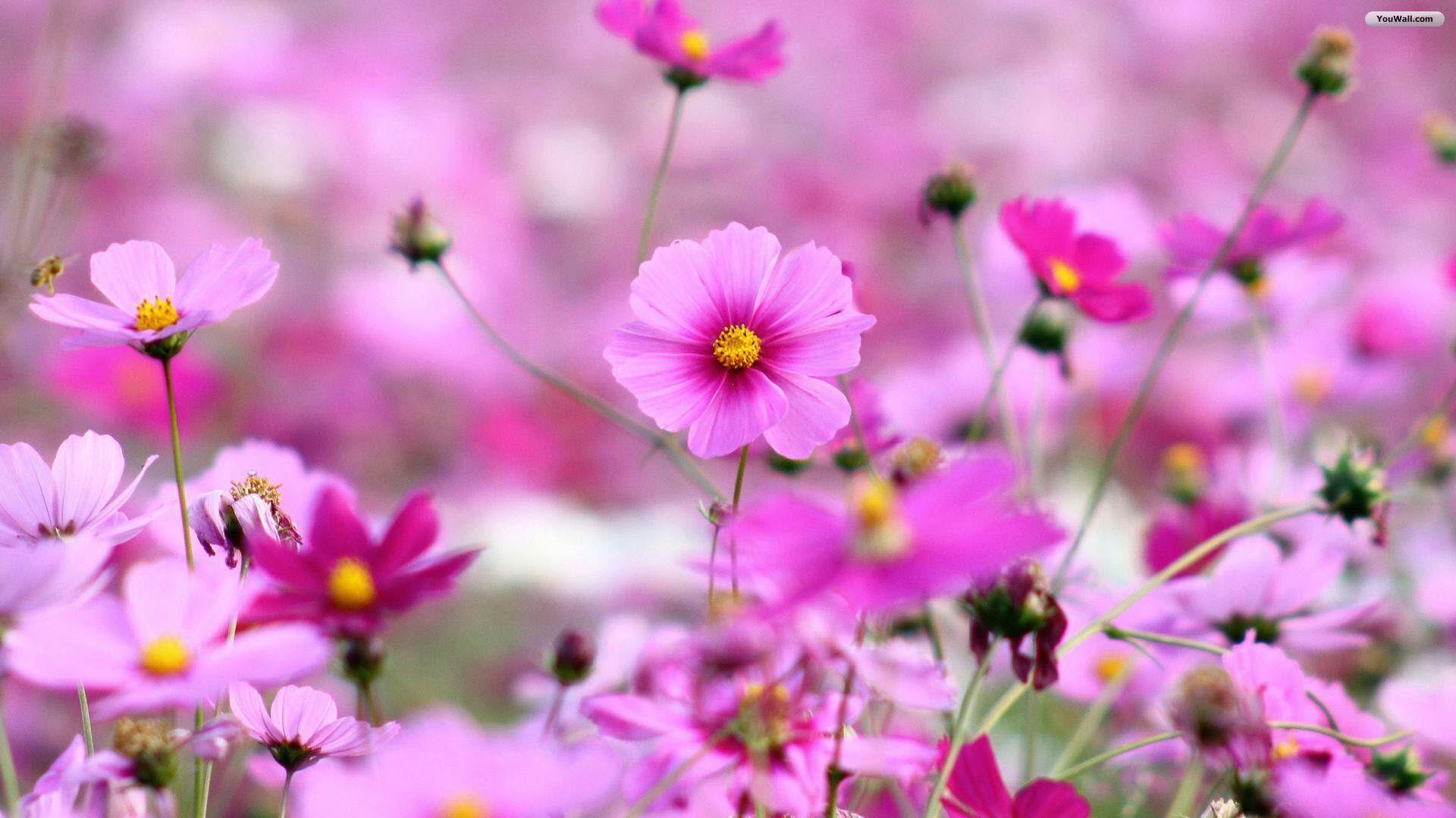 History Of Art Meno Istorija Istoriya Iskusstva Rosa Blumentapete Blumentapete Beste Blumen