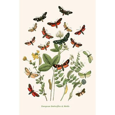 Buyenlarge European Butterflies And Moths By W F Kirby Graphic Art Size 42 H X 28 W X 1 5 Butterfly Illustration Free Illustrations Illustration Wall Art