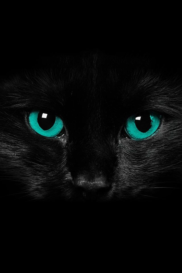 Wunderful Cat With Blue Eyes Black Cat Black Cat Superstition Black Cat Halloween