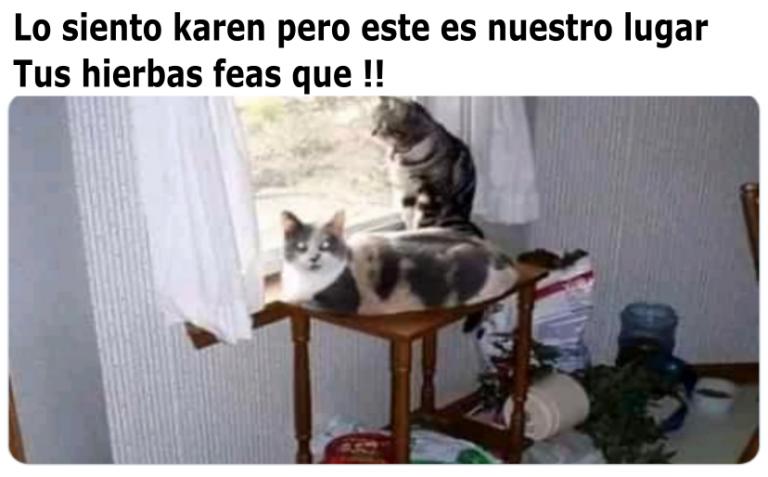 Memes De Karen Y El Gato Parte 5 Memes En Espanol La Mejor Recopilacion De Memes Lo Mas Viral De Internet Memes Memes Divertidos Meme Gato