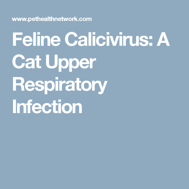 Feline Calicivirus: A Cat Upper Respiratory Infection