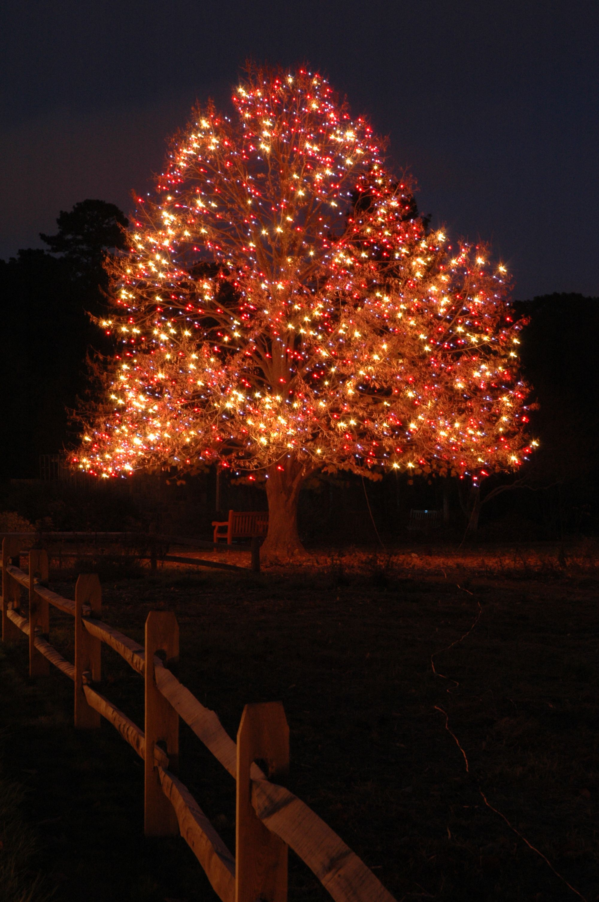 dominion garden of lights at the norfolk botanical garden
