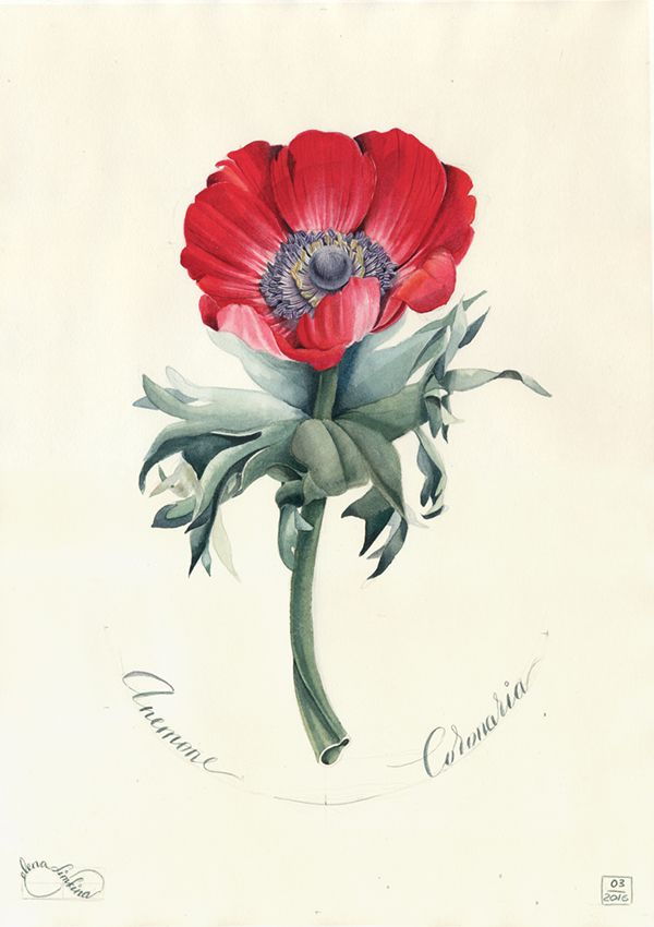 Watercolour portraits of flowers on Behance