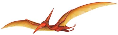 The long wings of this Pterodactyl help it soar far above the dangerous prehistoric land where dinosaurs once roamed. These flying reptiles were the first vertibrates to gain flight, and took to the skies even before birds could flap their wings.