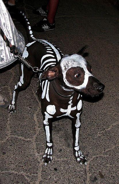 Dia De Los Muertos Day Of The Dead Dog Darci Weeks Can You