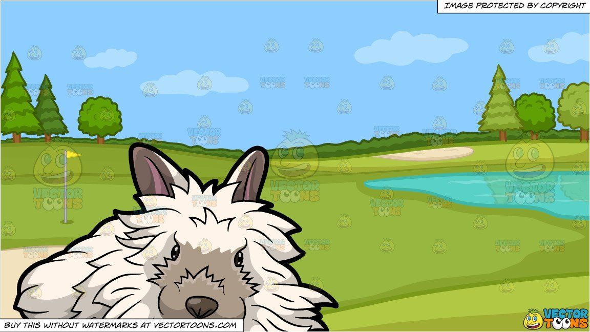 A Furry White Rabbit and Golf Course Putting Green Background ... on lion on golf course, lamb on golf course, monkey on golf course, eagle on golf course, coyote on golf course, baboon on golf course, cow on golf course, gopher on golf course, helicopter on golf course, kangaroo on golf course, fox on golf course, bear on golf course, elk on golf course, fish on golf course, pigs on golf course, geese on golf course, ram on golf course, raccoons on golf course, deer on golf course, rattlesnake on golf course,