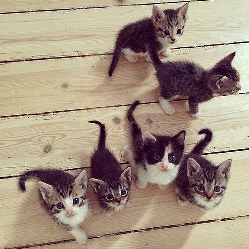 Piccola tribù di gattini