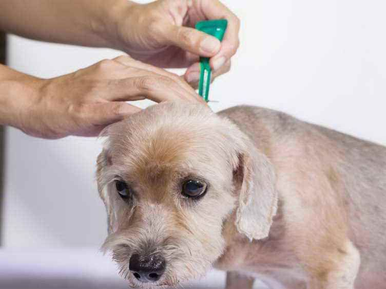 How To Get Rid Of Flea Eggs On Dogs