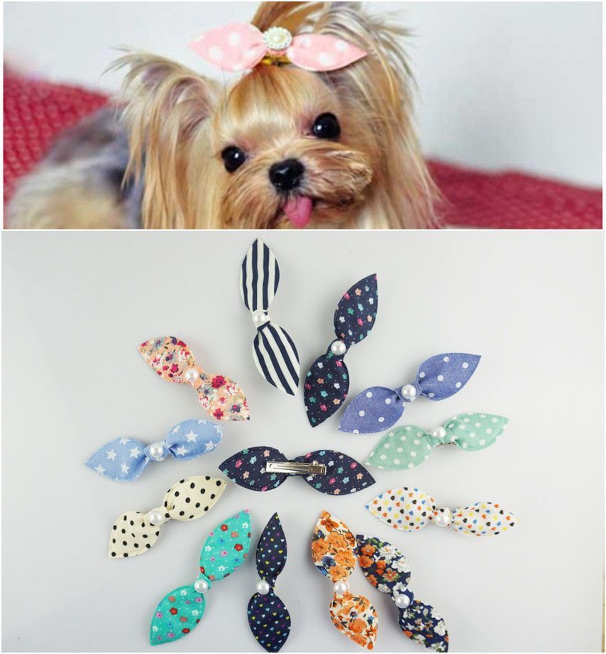 Cat Grooming Tips A Diy Guide For Home Dog Hair Bows Puppy