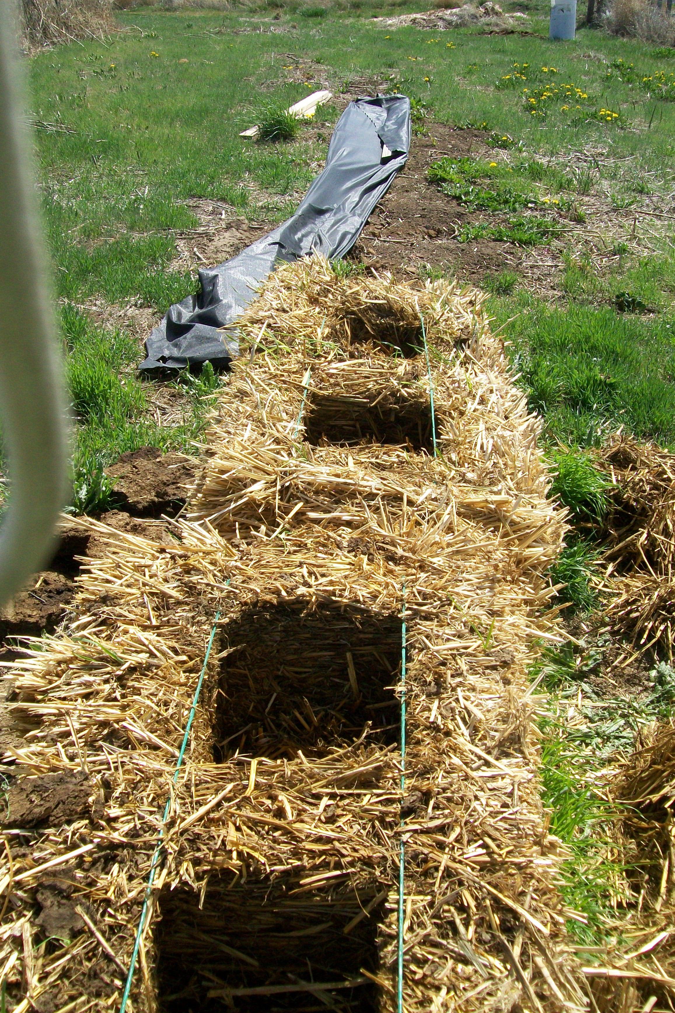 straw bale gardening means a lot of digging   Straw Bale Gardening ...