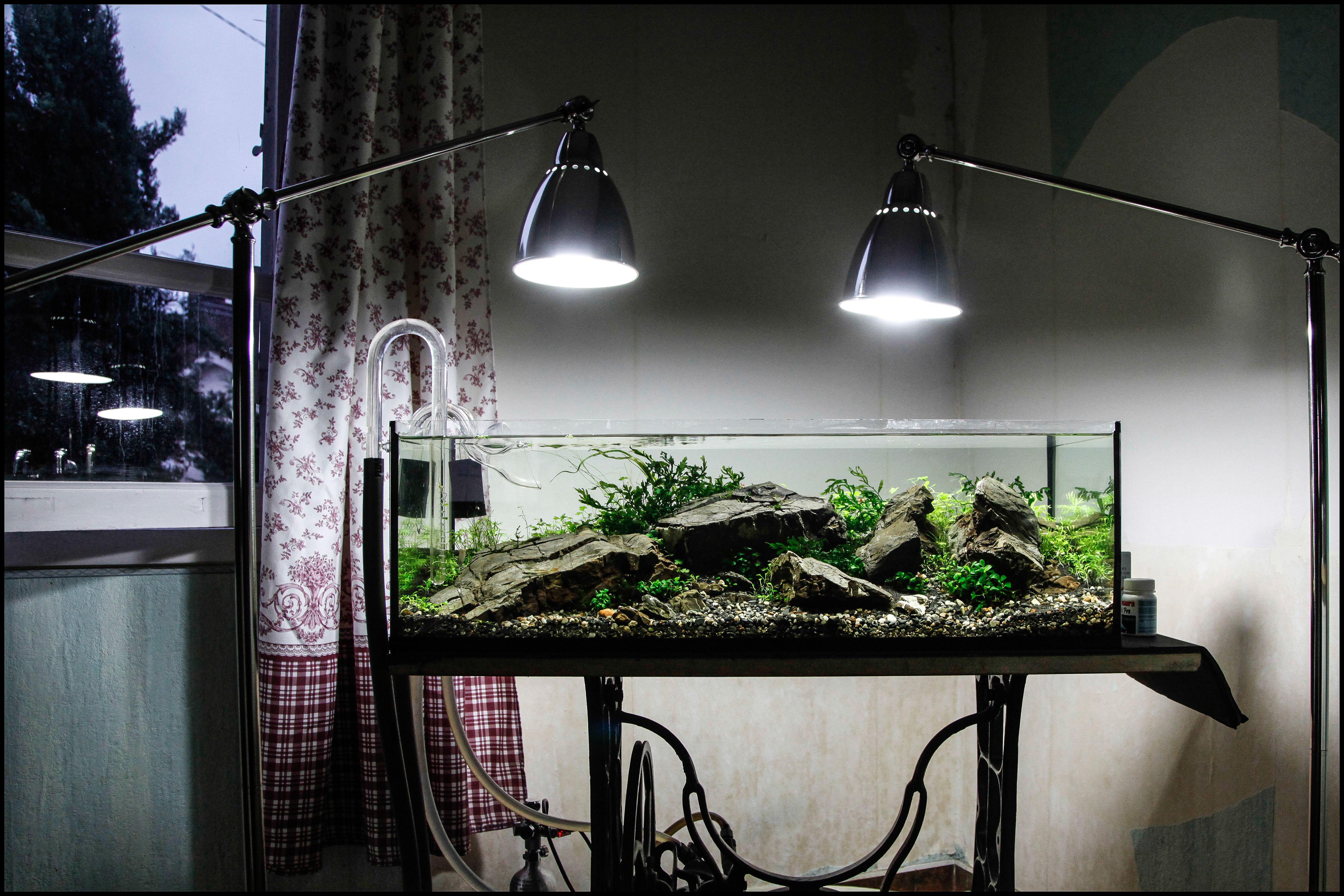 4a2283981f53df0ea6180b2c83c13866 Frais De Aquarium tortue Aquatique Schème