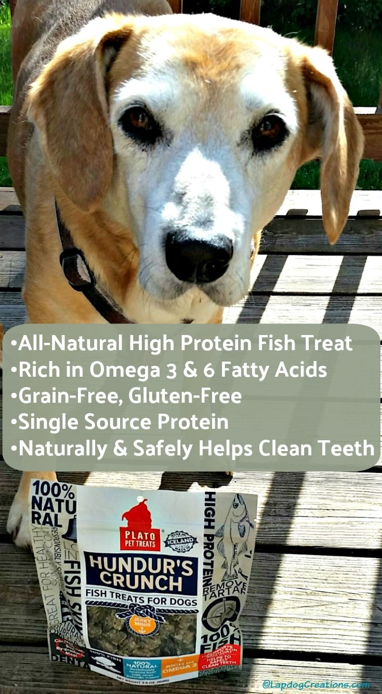 Plato Hundur's Crunch Fish Treats ChewyInfluencer Dog