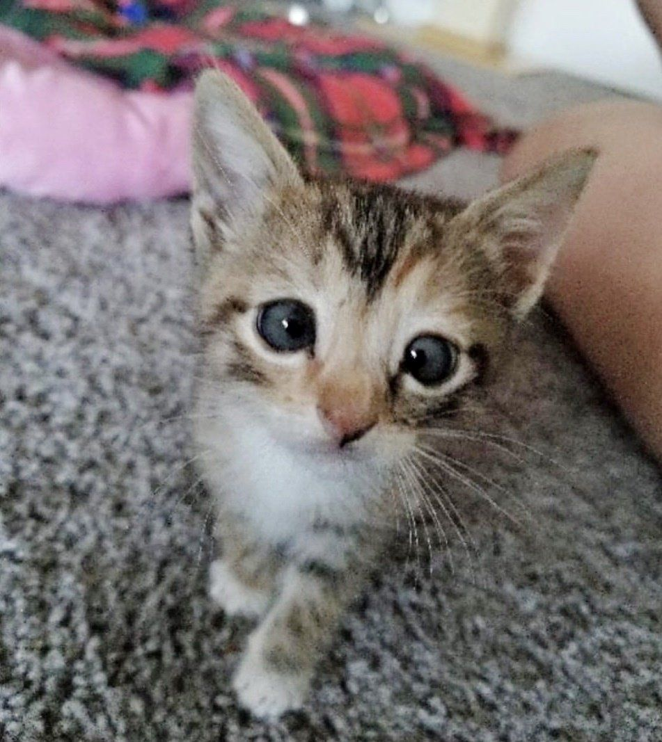 Man Adopts Kitten Who Couldn T Find A Home Because Of Her Eye He Knows She S Perfect Love Meow Kitten Shes Perfect Pets