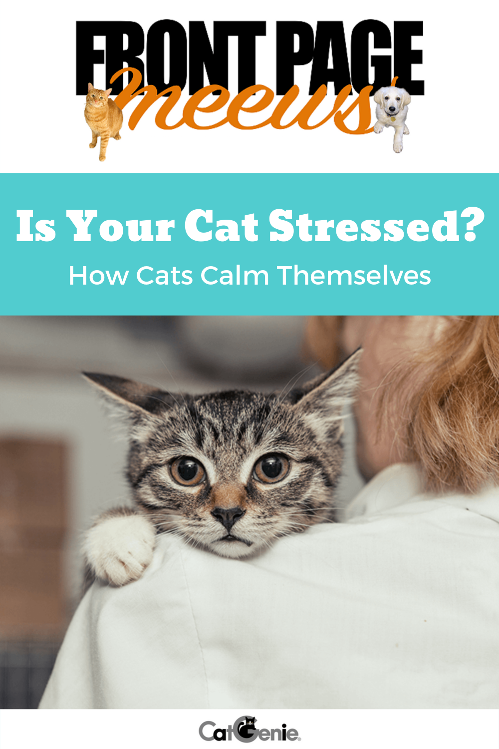 Is Your Cat Stressed How Cats Calm Themselves Cats Cat Behavior Stress