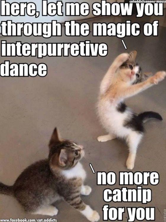 Lol Www Kittyprettygifts Com Cats Cute Kitty Memes