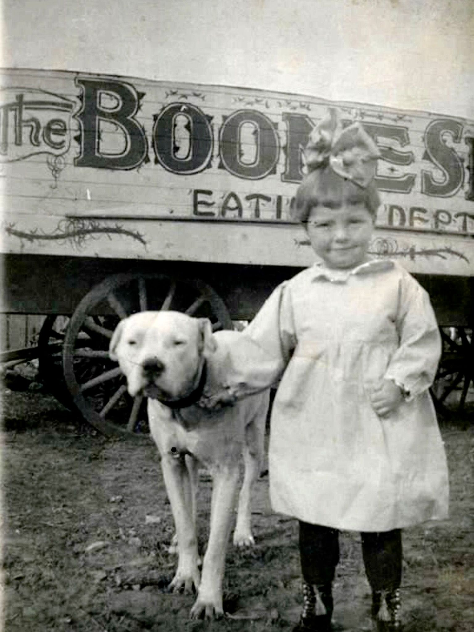 Kaufmannspuppy American Pitbull Terrier Nanny Dog