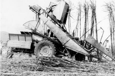 Early mechanical sugarcane harvester, Bauple.  This photograph was taken at Stan Wood's property (undated)