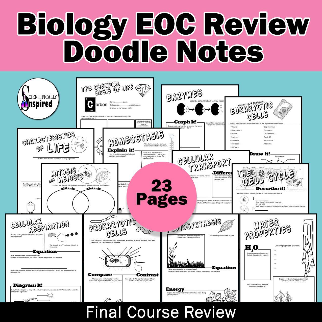 BUNDLE: Biology EOC Doodle Notes Final Review | Biology ...