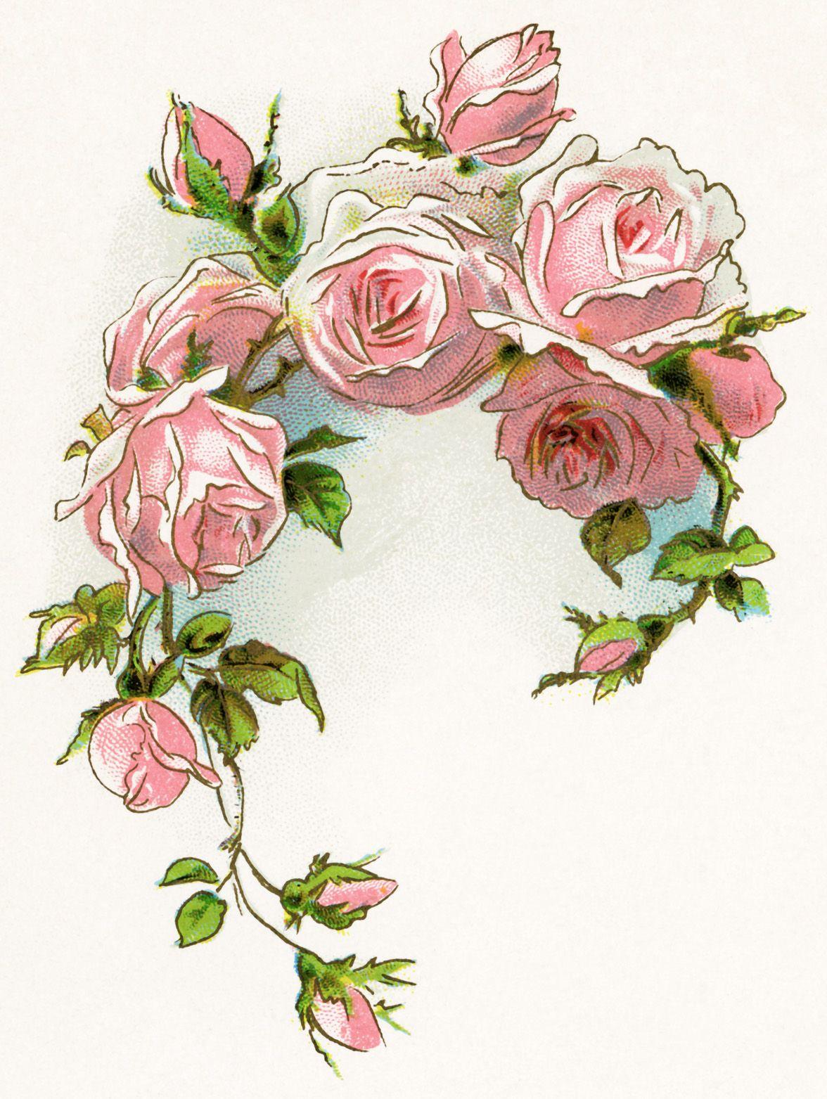 Victorian rose free vintage image free vintage clipart rose pink