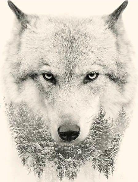 Épinglé par Nikita Yuzulenas sur Волк | Animaux adorables ...