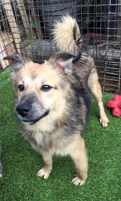 Denis  7 month old male Cross-Breed #cutedogs #cute #dogs #dog #pets #babblepets