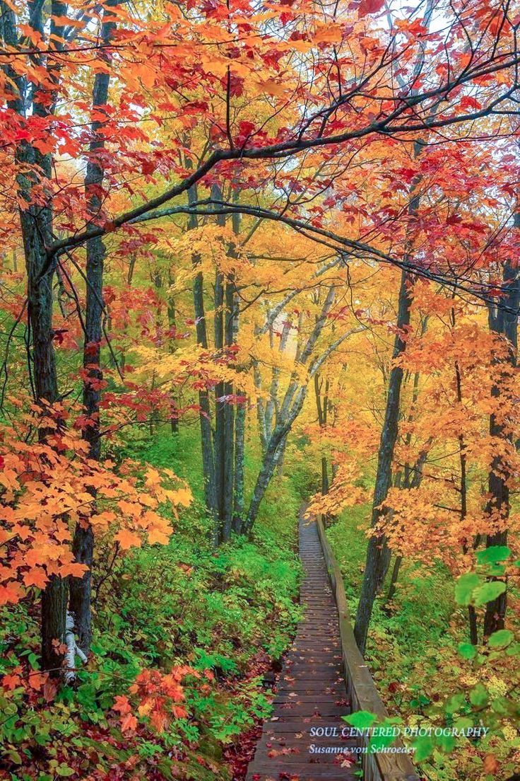 Autumn Photos, Set of 3 Prints, Nature Photography, Enchanted Forest, Fall Colors, Woodland Trail, Minnesota, Orange Yellow, Magical, fog