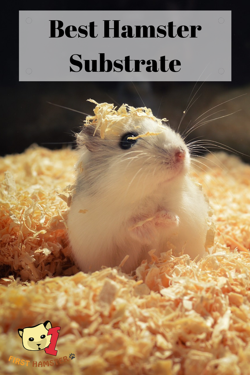 Hamsters prefer bedding that's going to be soft on their