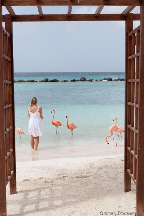 One Of The Top 10 Things To Do In Aruba