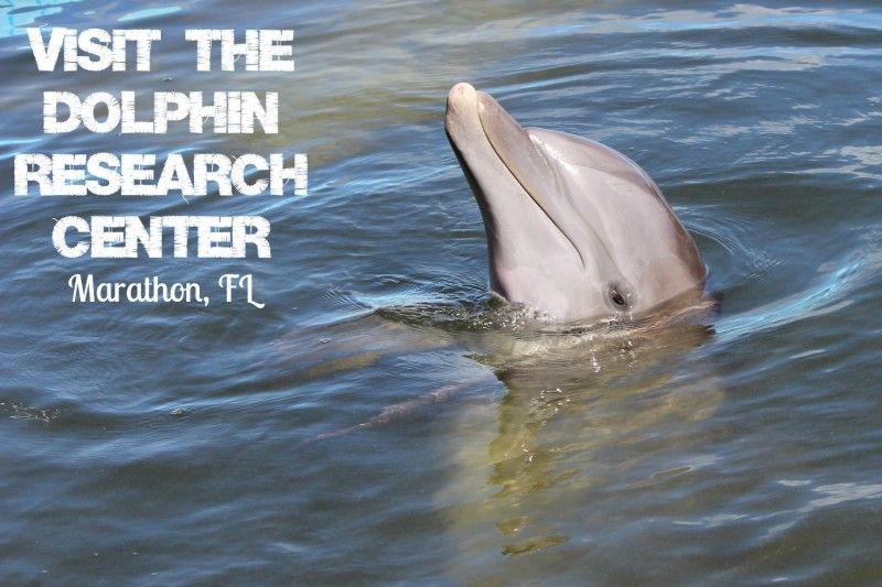 Where To See Dolphins In Florida Dolphins Florida Keys Florida Vacation