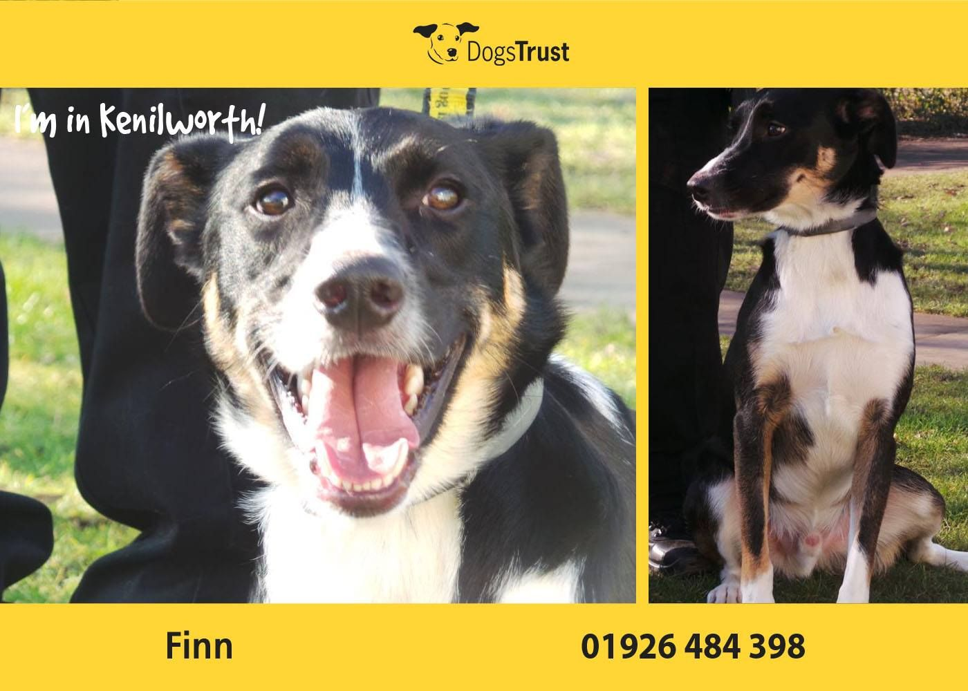 Finn Here Came To Kenilworth From A Home Because His Owners Could No Longer Look After Him From What We Have Seen So Far He Is With Images Dog Adoption Fur