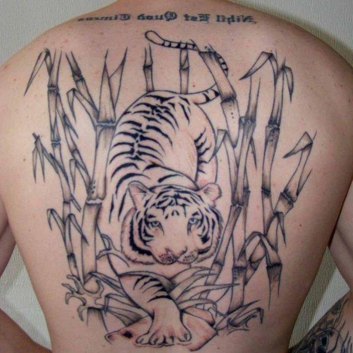 Download Free Tattoo On Back Tiger Bamboo Tattoo On Thigh Tiger