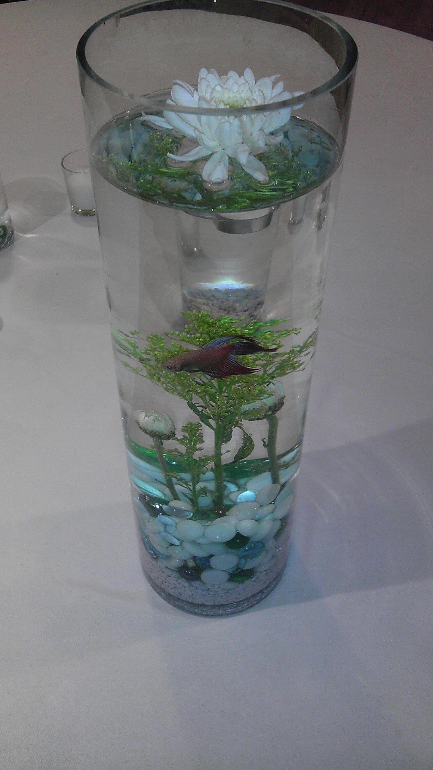 Centerpiece Made With Live Betta Fish Fish Centerpiece Wedding