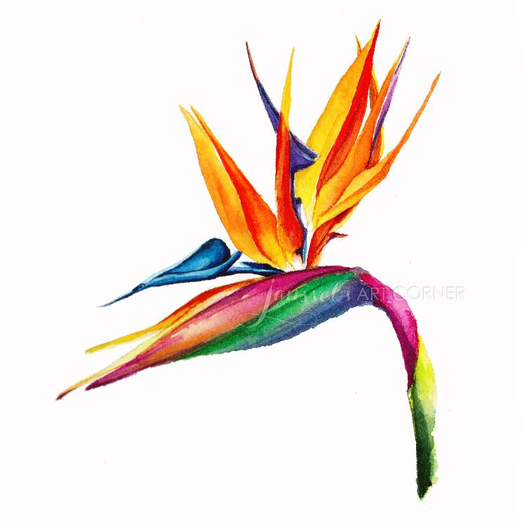 Bird Of Paradise Watercolor Painting Paradise Painting Birds Of Paradise Botanical Artwork