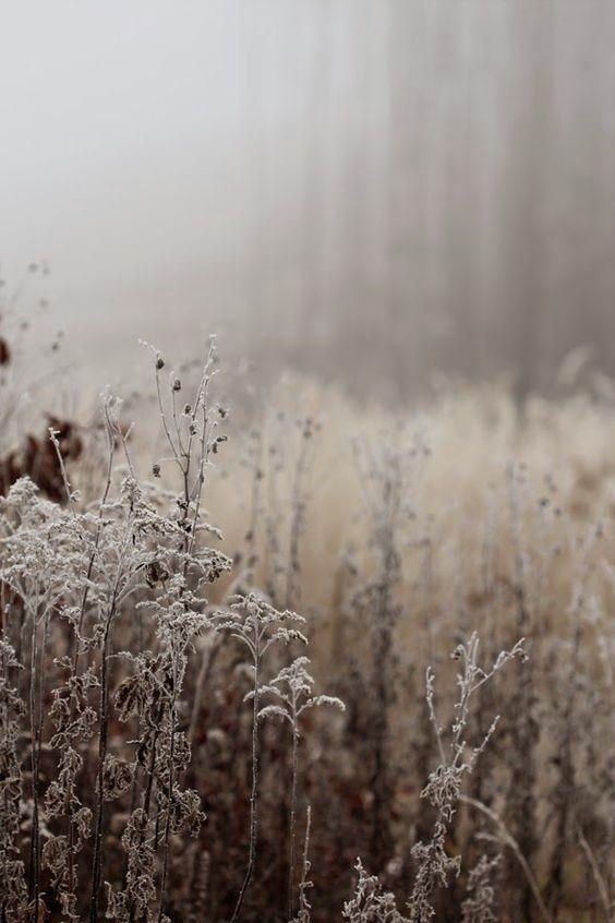 Pin By Habit Deshabille On Soft Winter Antique Winter Nature