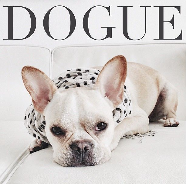 12 French Bulldogs You Need To Be Following On Instagram French