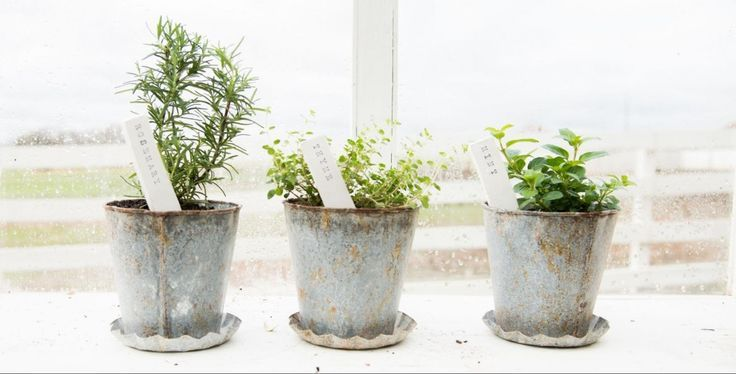 Diy plant stakes project ideas diy plant stakes solutioingenieria Images