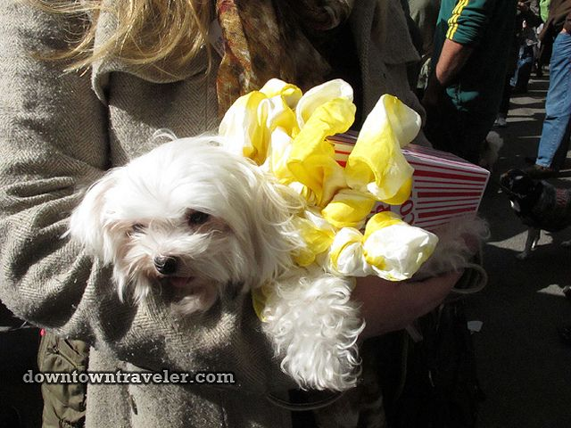 maltese dog halloween costumes maltese cutties