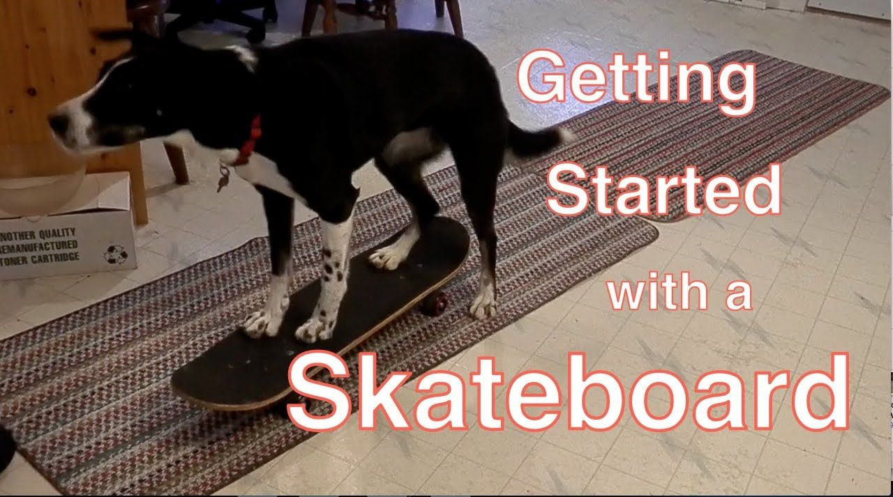Getting started with a skateboard training for dogs dog