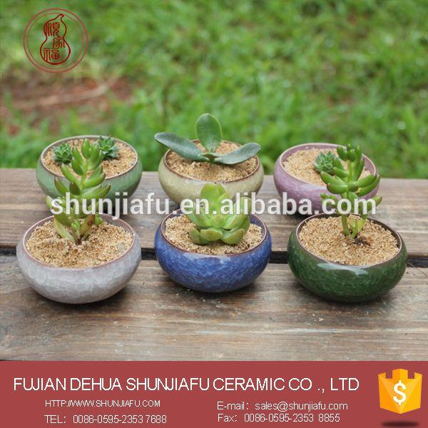 Round Shape Color Mini Succulent Plant Pots Bulk Whole