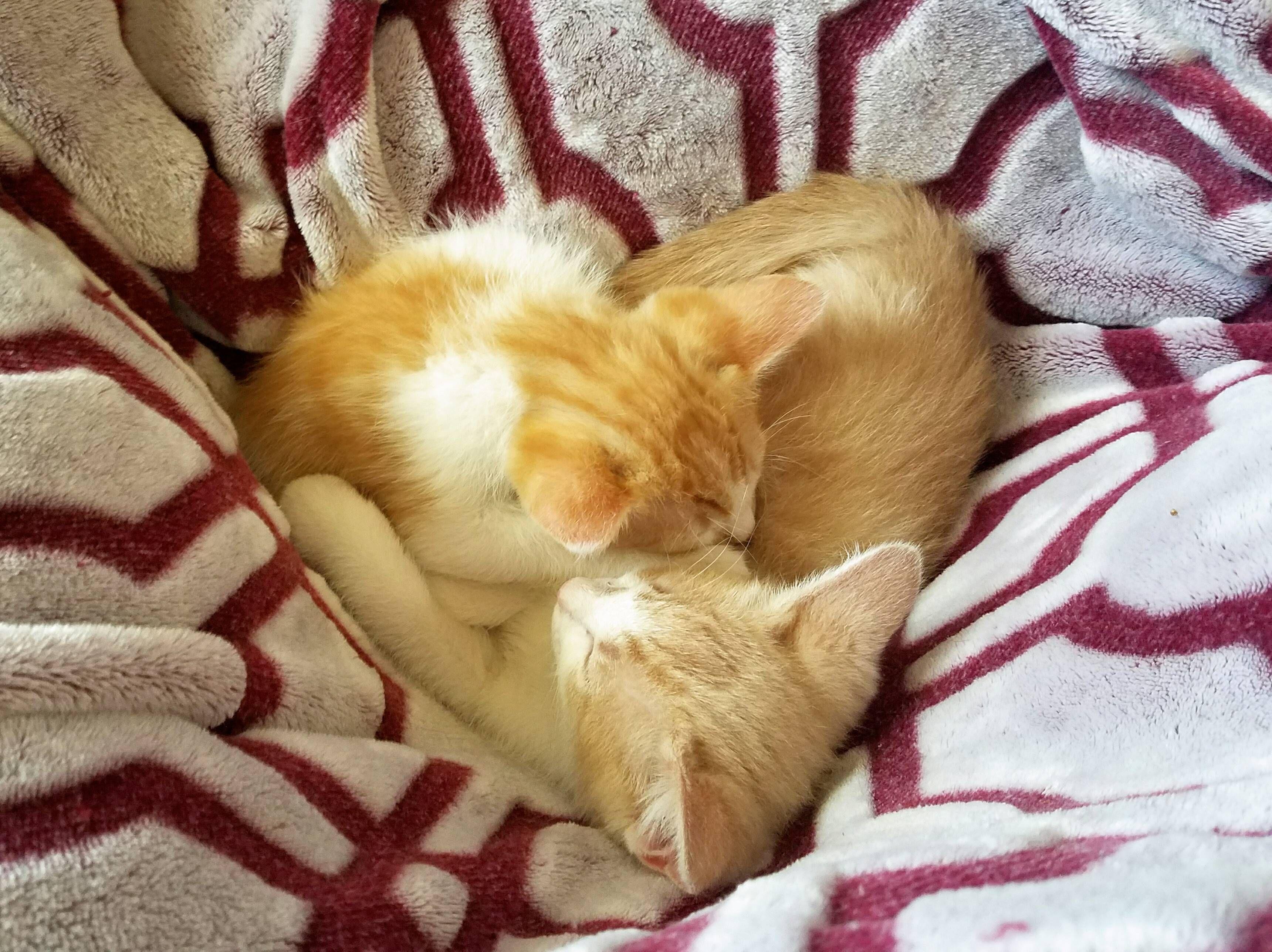 мытья используют котенок доброе утро фото оснащены кондиционером, мини-баром