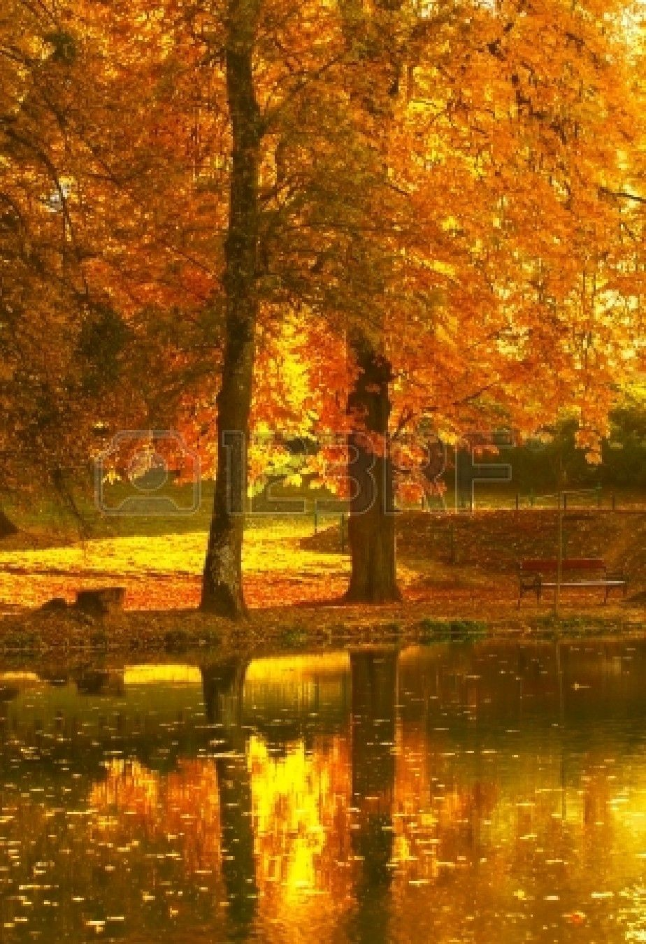 In This Photo The Beautiful Autumn Wood Is Shown Autumn Landscape Autumn Scenery Autumn Scenes