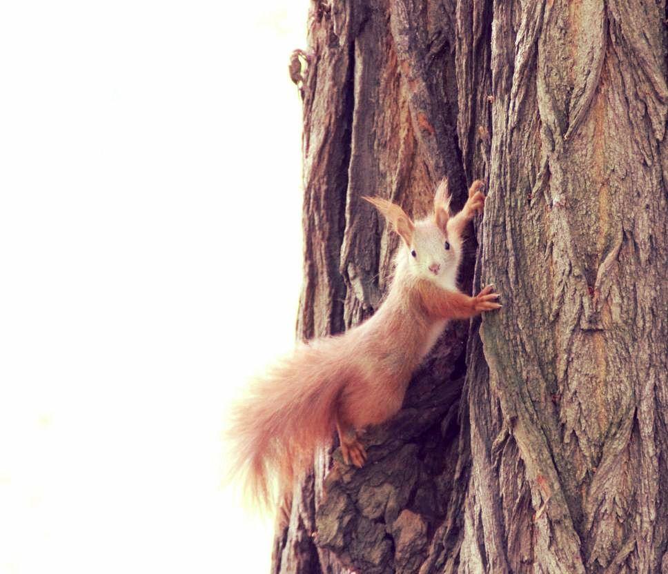 Niedliches Eichhornchen Im Park Tierchen Niedlich Cute Welove Leipzig Thisisleipzig Auenwald Putzig Weloveleipzig Leip Cute Squirrel Squirrel Cute