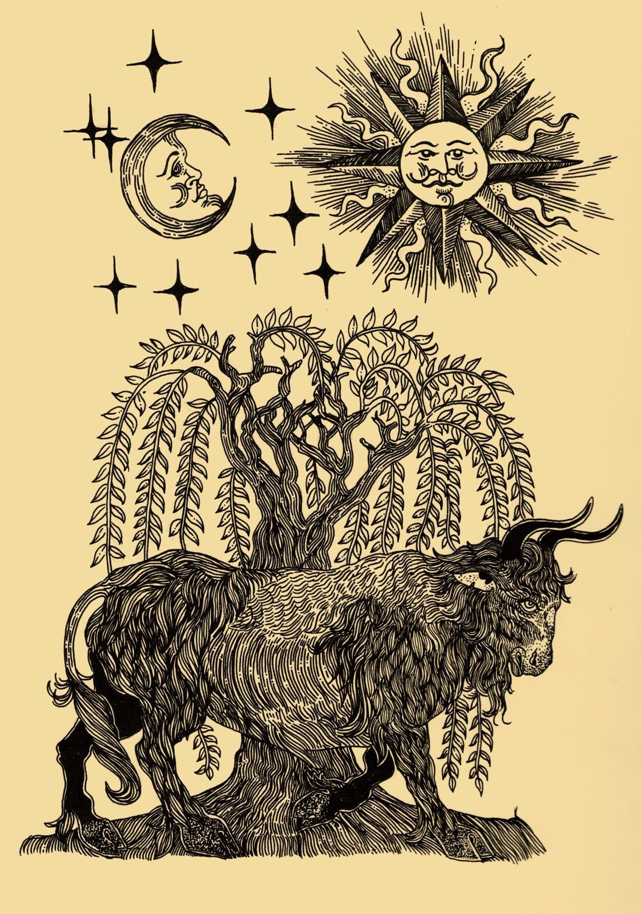 Ox and Willow | Curiosities | Pinterest | Illustrations