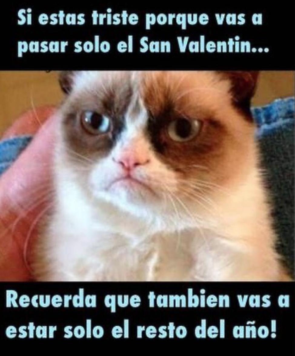 Chiste Cruel Grumpy Cat Quotes Memes De Gatos Divertidos Meme Grumpy Cat