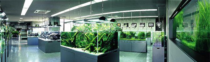 ada shop aquarium