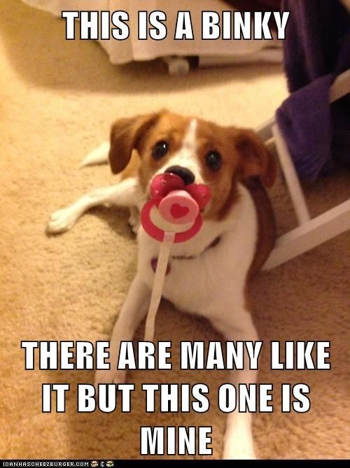 Get Your Own Binky Funny Dog Pictures Dogs