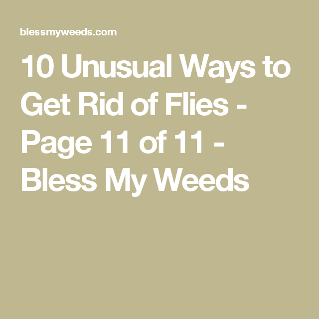 10 Unusual Ways to Get Rid of Flies (With images)   Get ...
