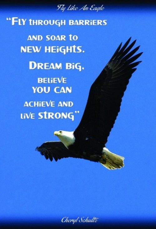 Eagle Quotes Căutare Google Eagles Quotes High Quotes Eagles